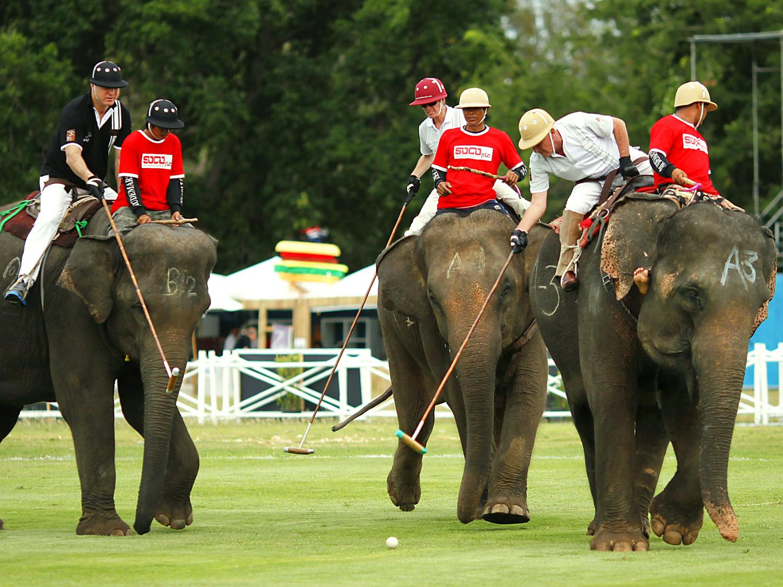 elephant polo sport