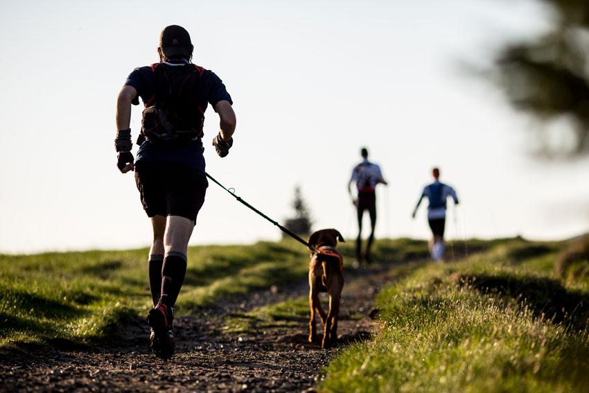 dog fitness esercizi