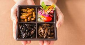 Mangiare insetti benefici