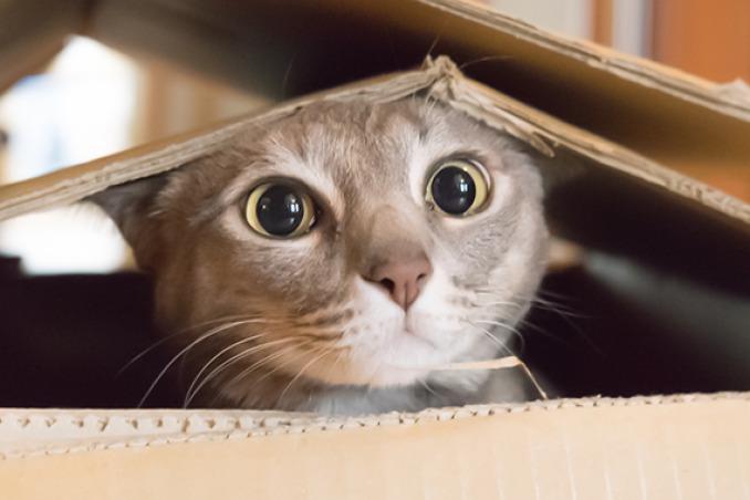 Perchè gatti amano scatole