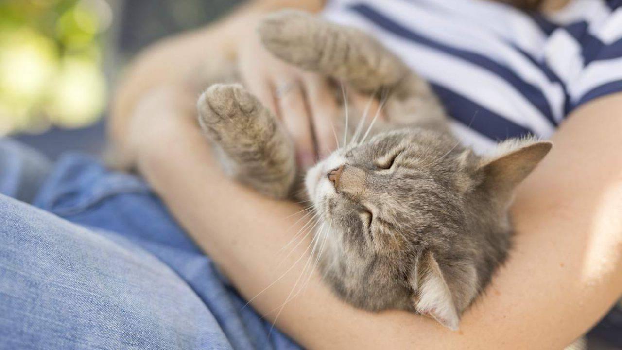Come gatto dimostra affetto