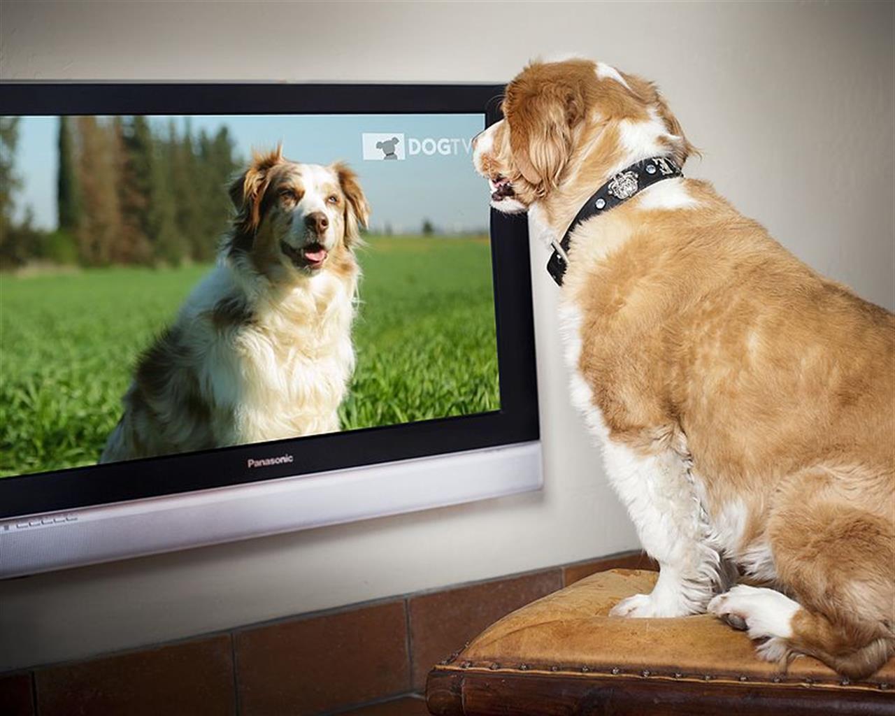 Cani guardano televisione