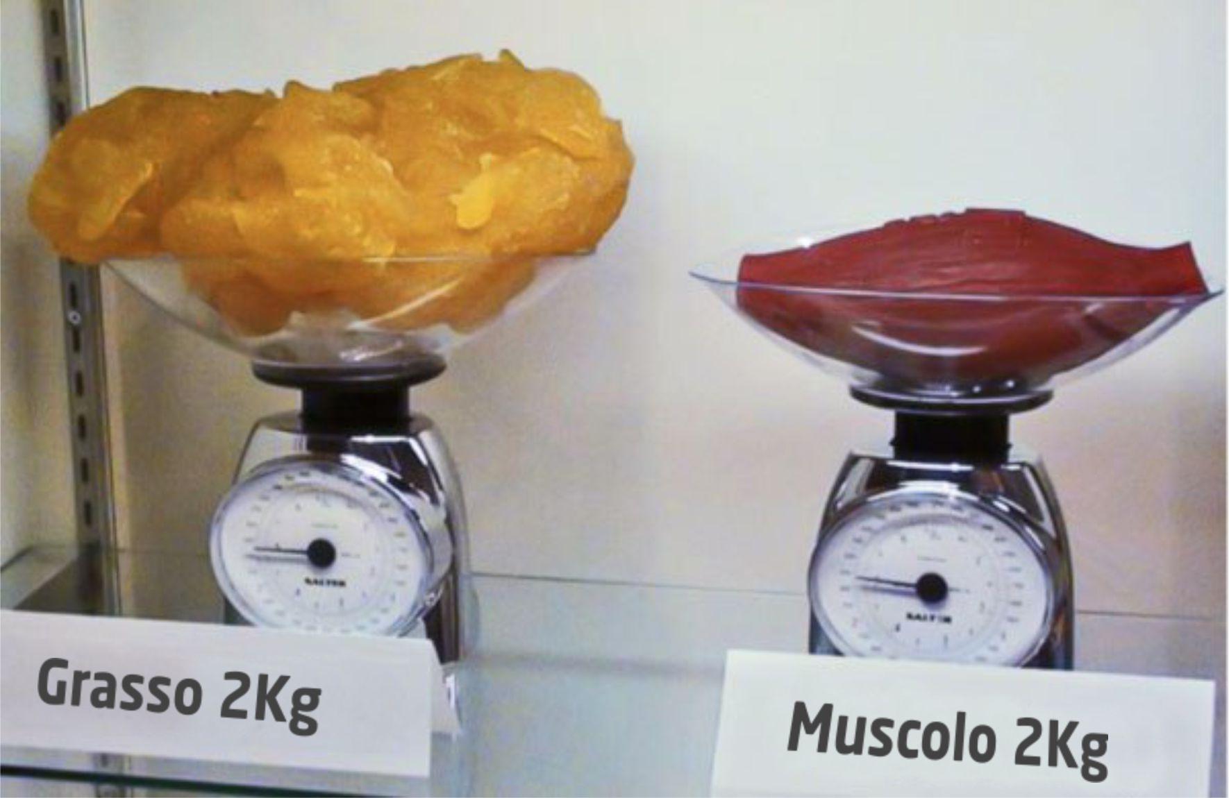 Corrispondenze chilo grasso corporeo
